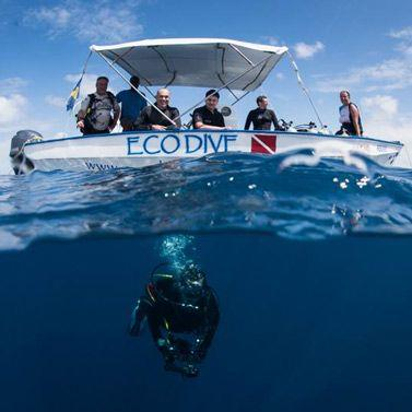 Eco Dive Barbados