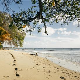 Fliegen Sie diese Ostern mit der Lufthansa nach Barbados. Der Flugverkehr wird ab dem 20. März wieder aufgenommen